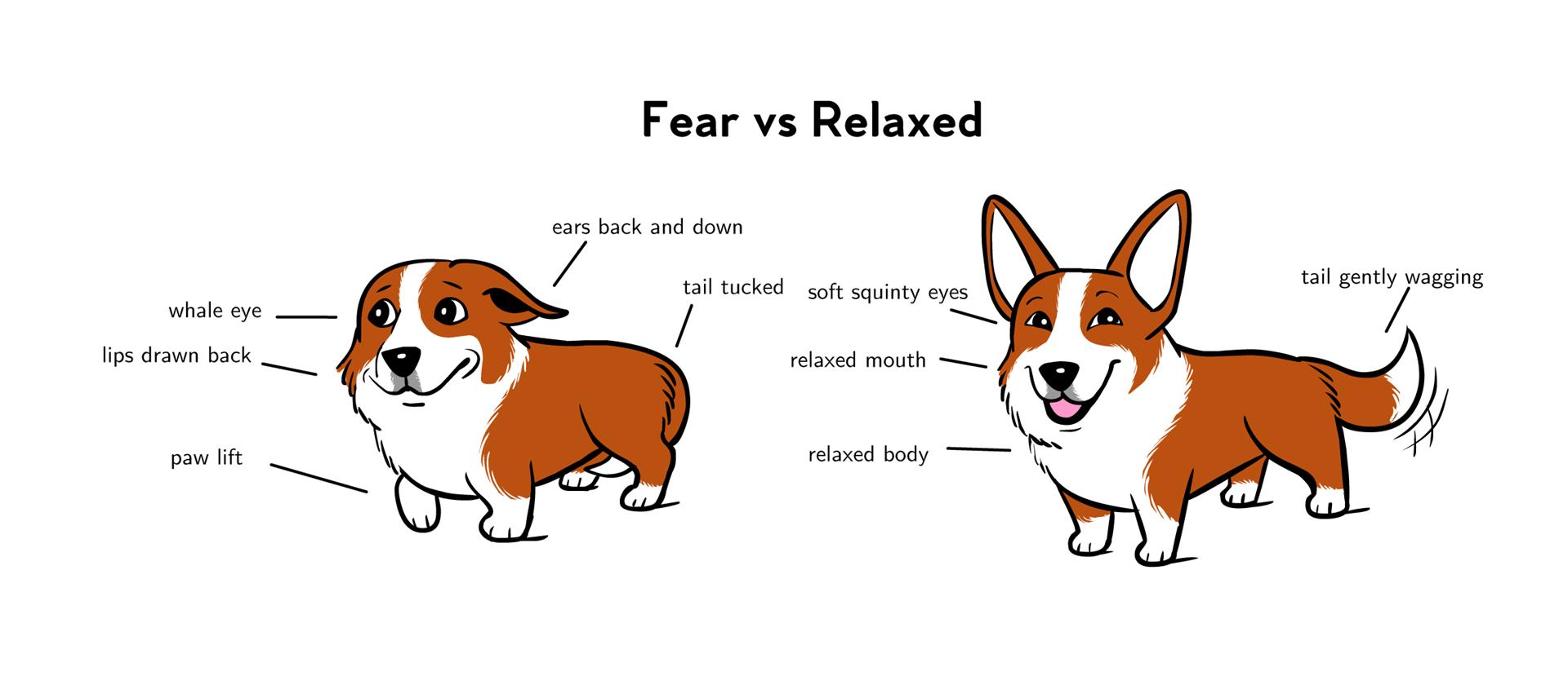Top  Dog Training Books