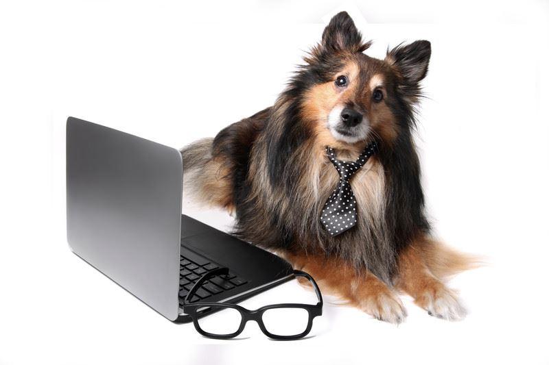 The Pet Professional Guild International Chaper Recorded Webinars