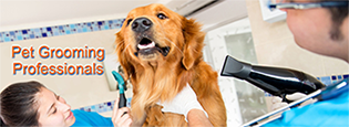 Pet Grooming Professionals